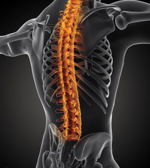 T12 Spinal Cord Injury