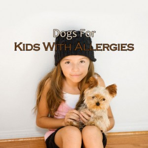 Best Dogs For Kids With Allergies